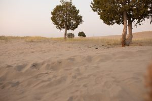 Ordinary Sandy scene