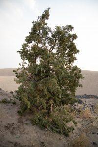 Ordinary Tree