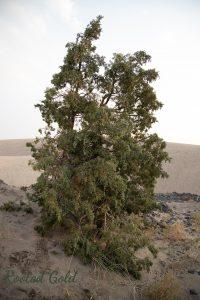 Ordinary tree image before