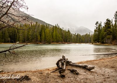 Grand Teton National Forest Landscape Photography