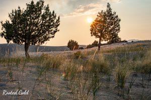 dunes at golden hour