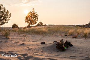 sand dunes at golden hour