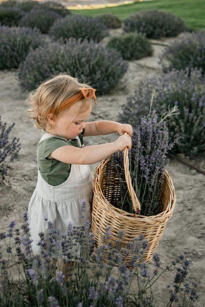 sage lavender